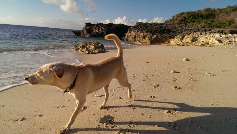 犬と海 散歩